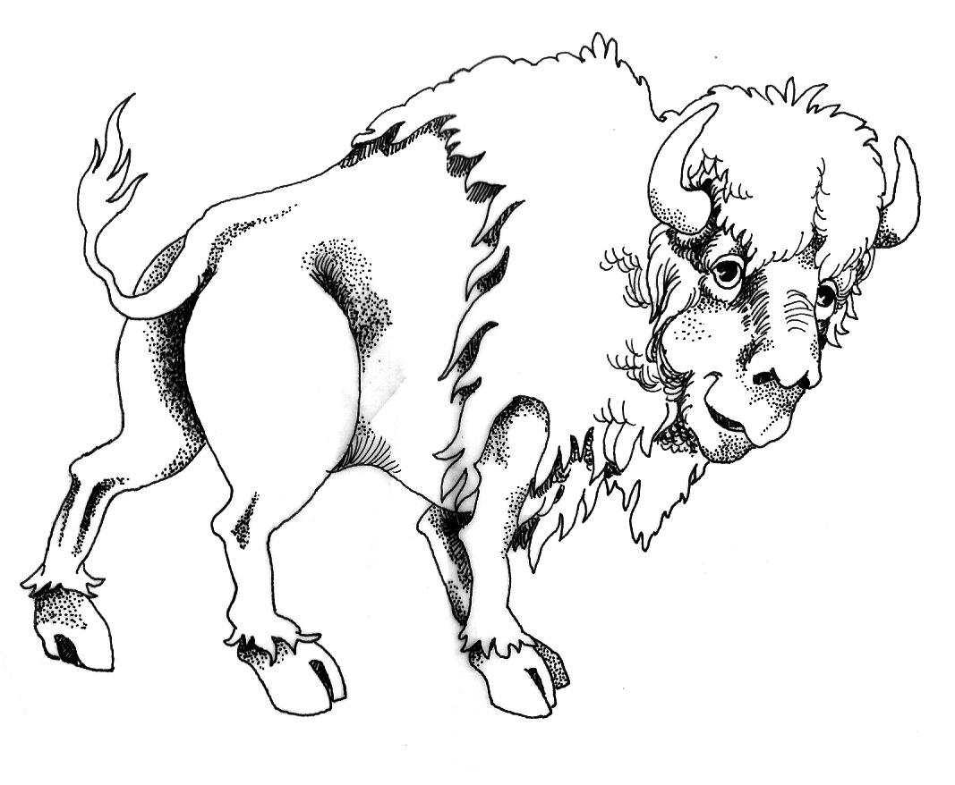 1067x878 Animal Drawings By Bcasazza
