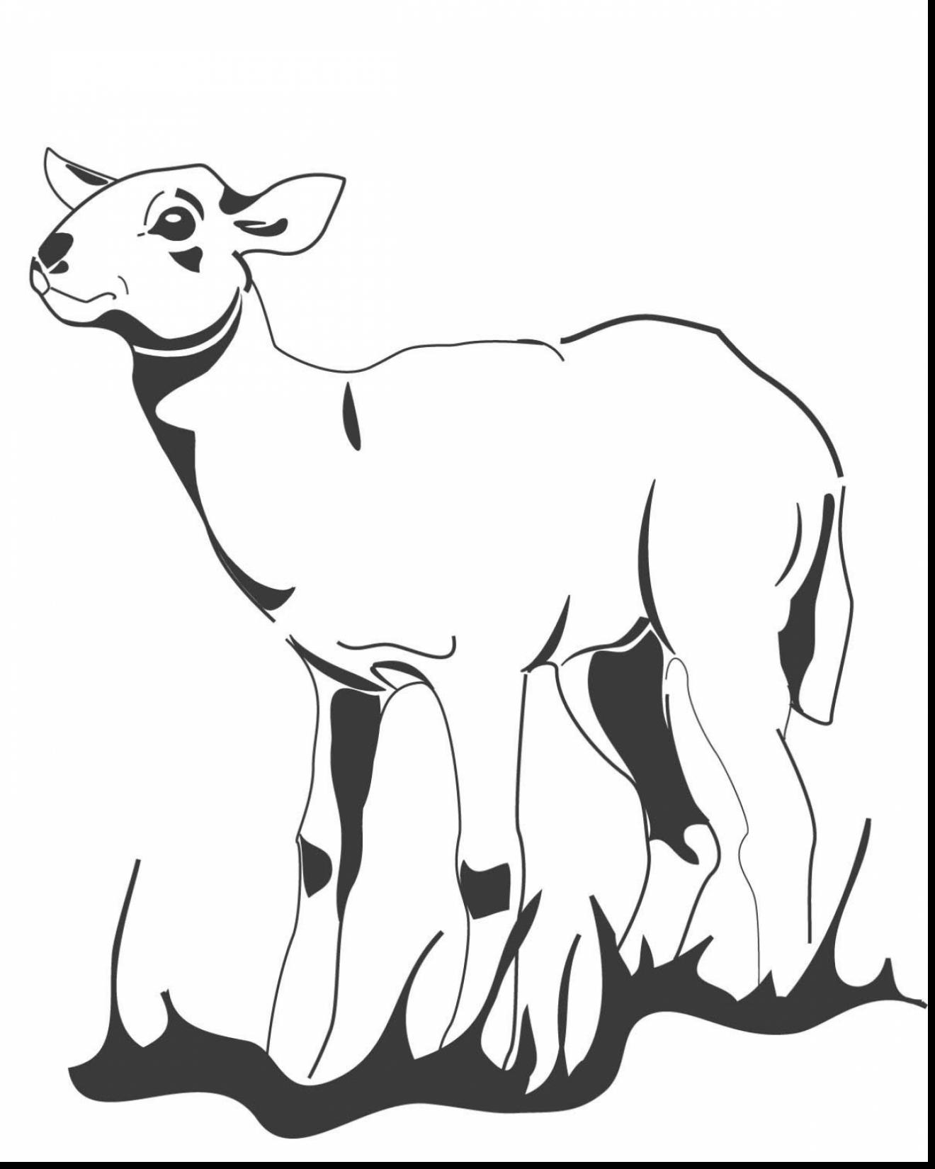 1320x1650 Lamb Coloring Page Image Clipart Images