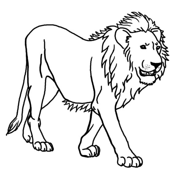 570x570 Lion Clipart Black N White