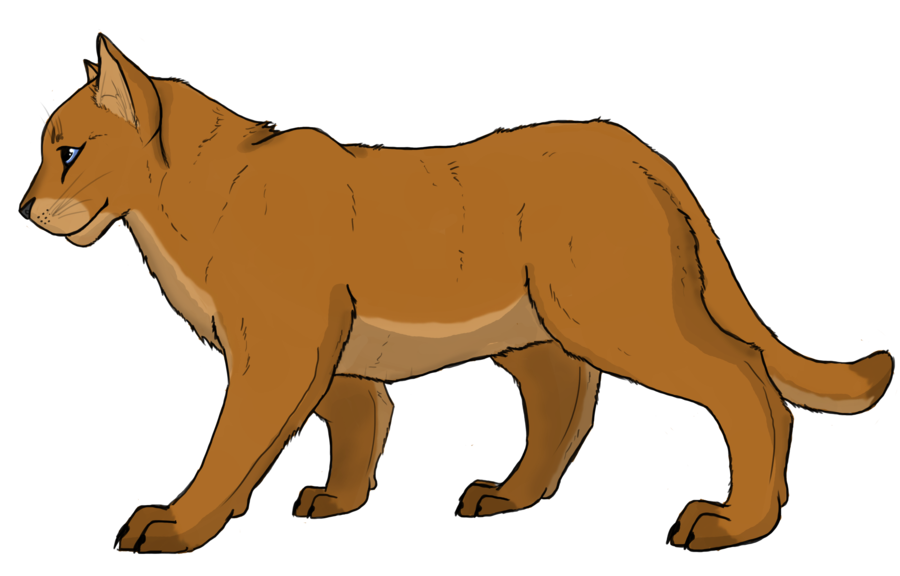 900x576 Mountain Lion Clipart