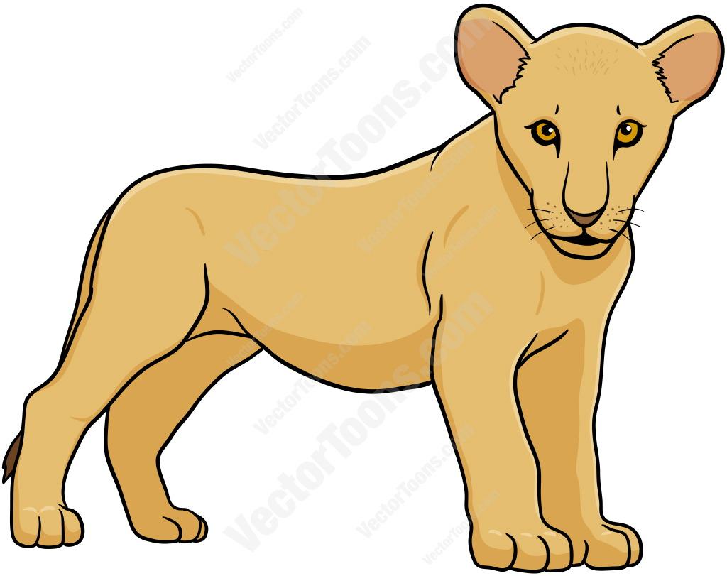1024x811 Lion Cub Standing Lion Cub