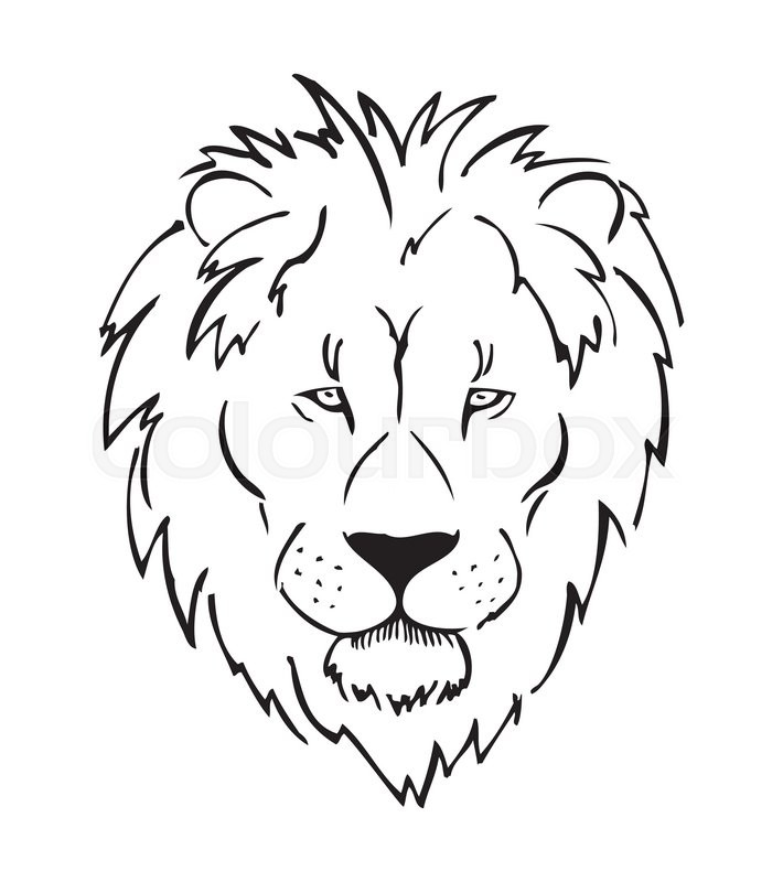 710x800 Full Face Lion Head, African Lion, Sketch, Black And White Vector