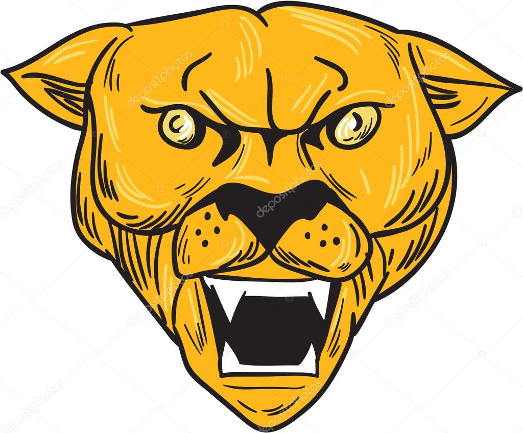 1024x848 Angry Cougar Mountain Lion Head Drawing Stock Vector