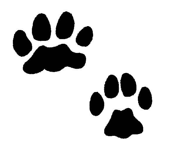 649x500 Lion Tracks Clip Art