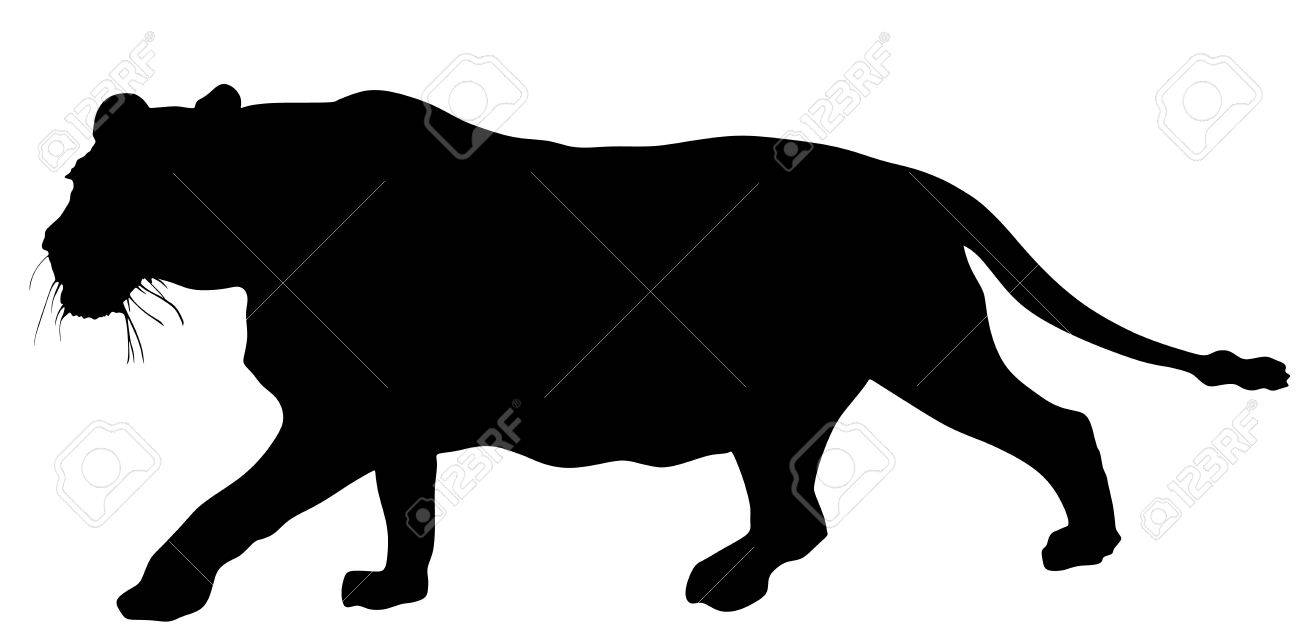 1300x644 Lioness Vector Silhouette Illustration Isolated On White
