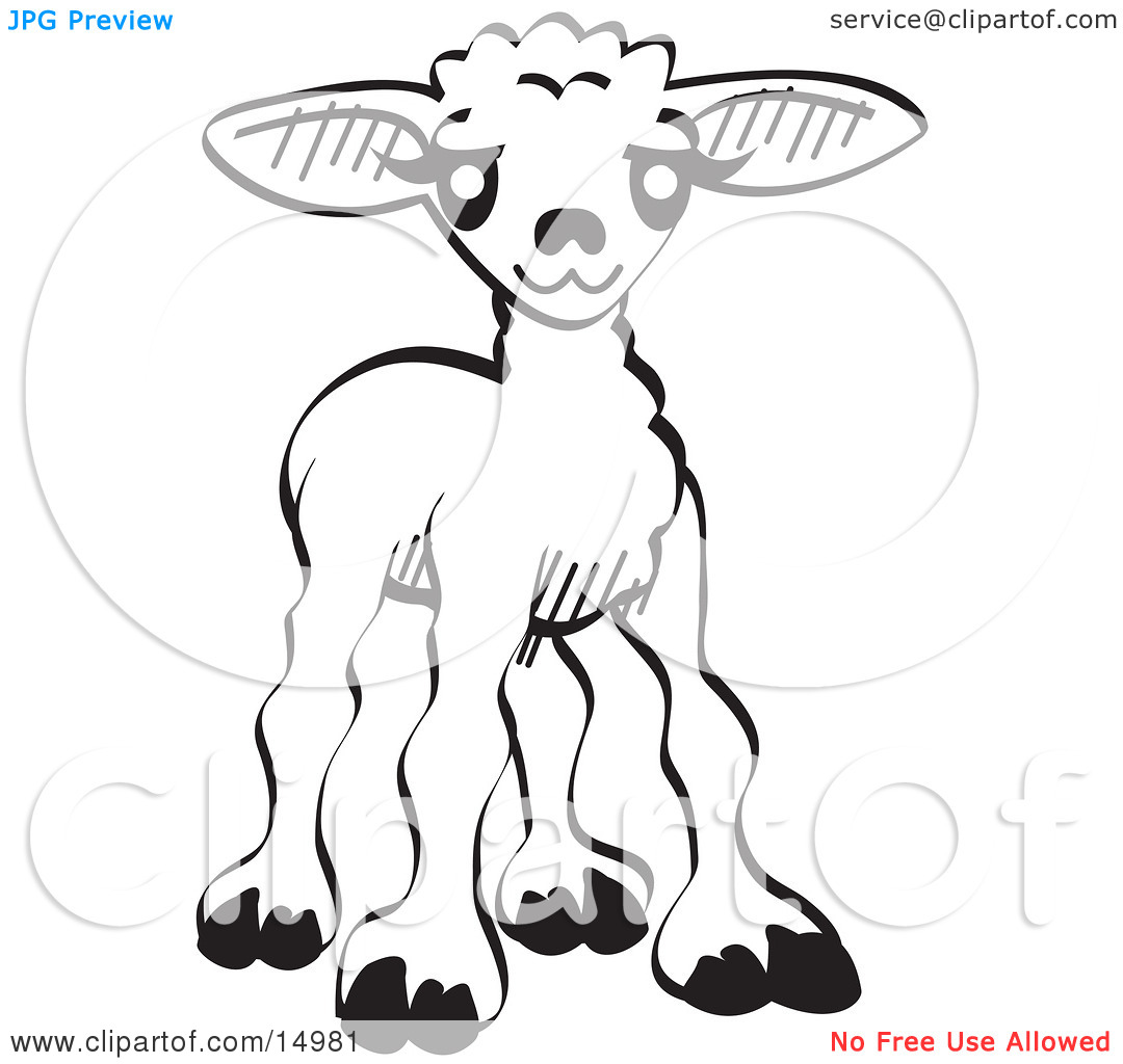 1080x1024 Little Lamb Clipart