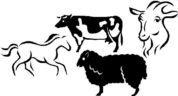 606x329 Livestock Show Clipart