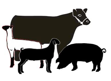 Livestock Show Animal Clipart | Free download best ...