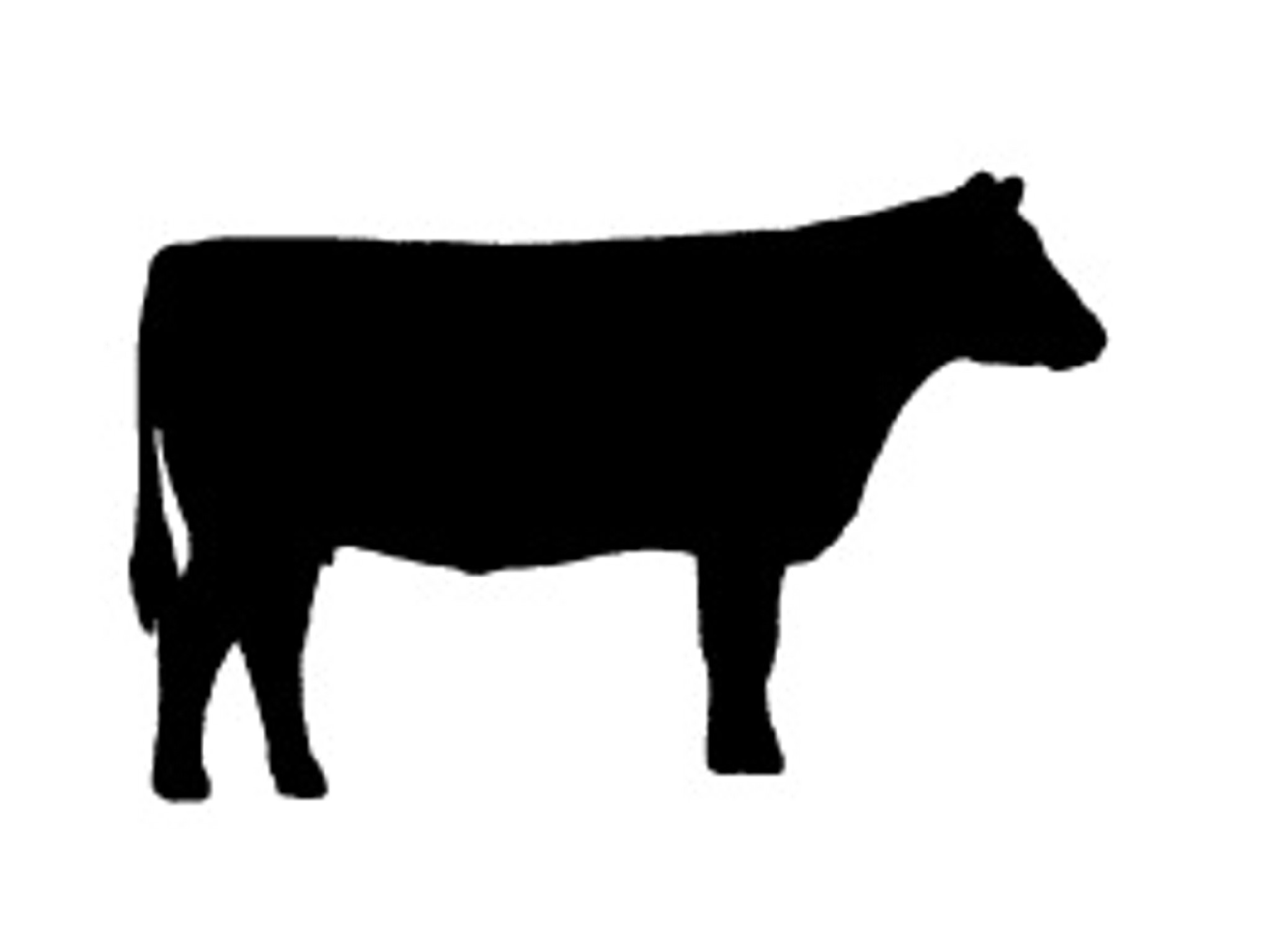 2048x1536 Buncombe County 4 H Kiwanis Calf Chain Cow, Clip Art And Silhouettes