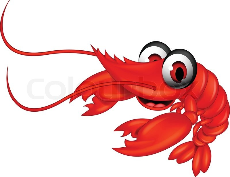 800x615 Funny Red Shrimp Cartoon Stock Vector Colourbox