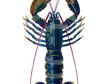 340x270 Lobster Clip Etsy