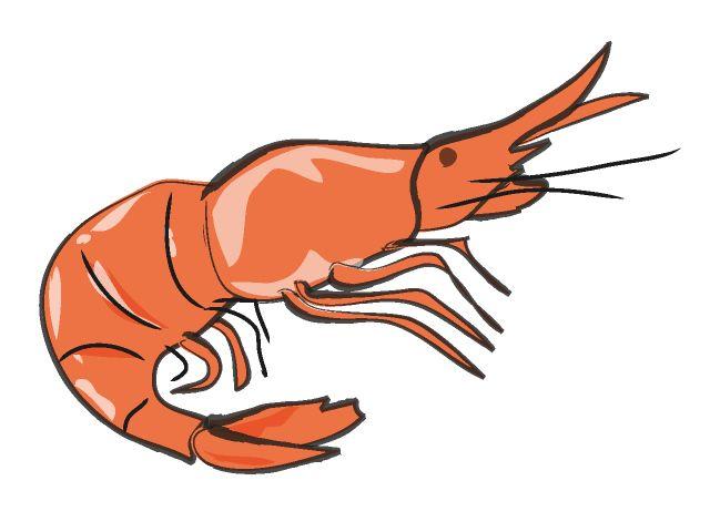 640x480 Shrimp Clip Art
