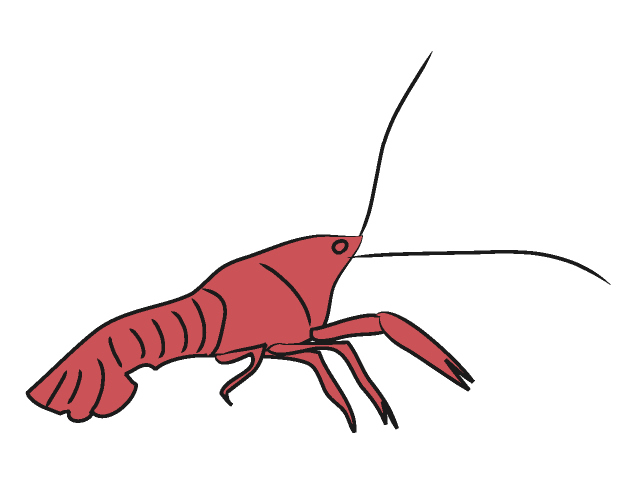640x480 Crawfish Clipart Clipart Panda