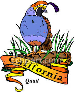 246x300 Bird Of California, Valley Quail Sitting On A Log With A Gold