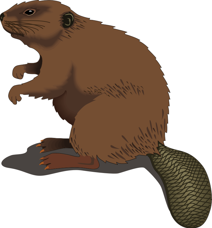 744x800 Beaver Clipart Log