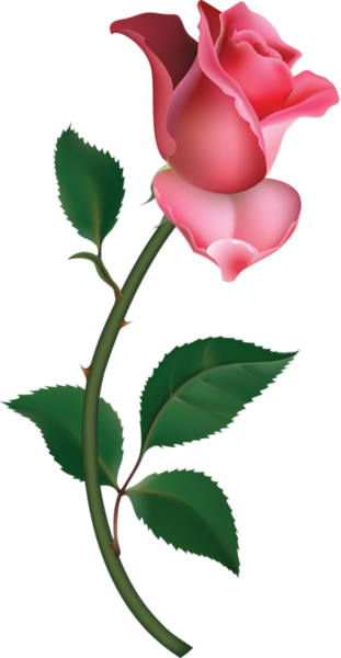 311x600 Long Stem Red Rose Clipart