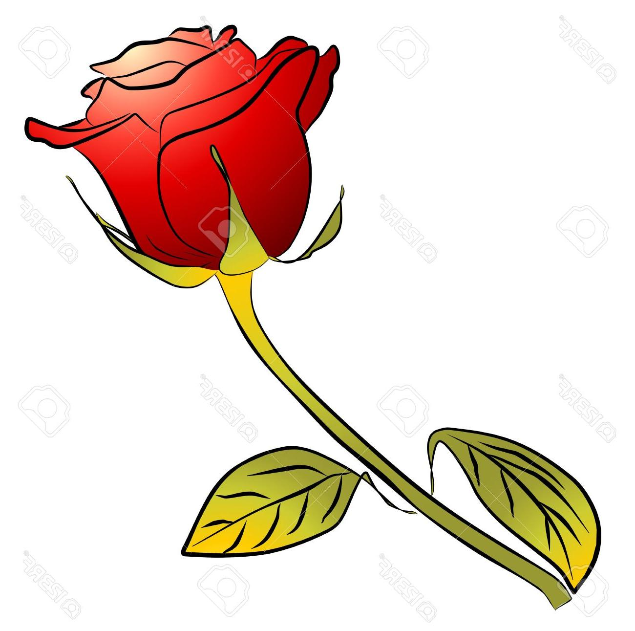 1300x1291 Best Hd One Red Rose On White Background Stock Photo Stem Long Drawing
