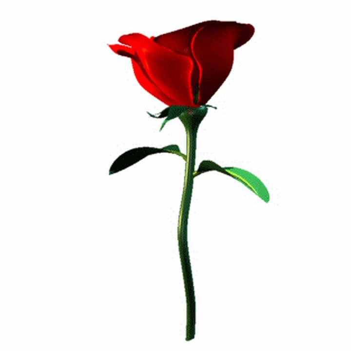 720x720 Stem Clipart Long Stem Rose