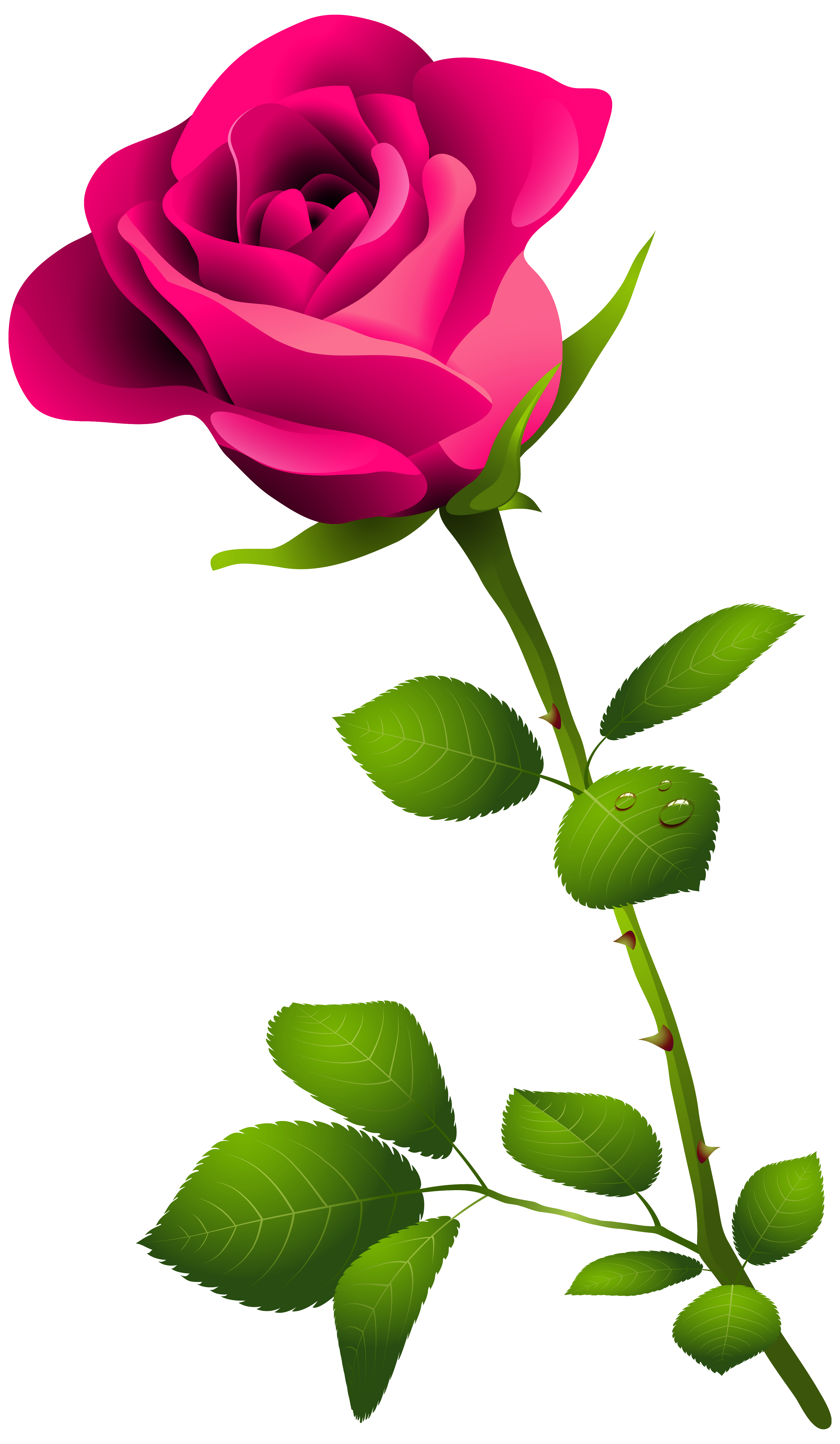 3658x6286 Free Pink Roses Clipart
