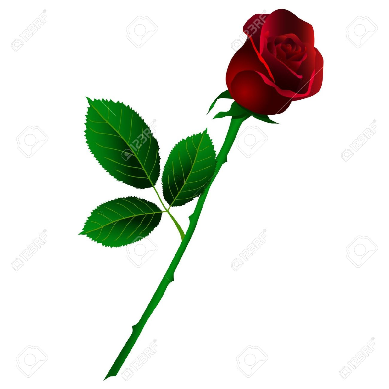 1300x1300 Stem Clipart Long Stem Rose