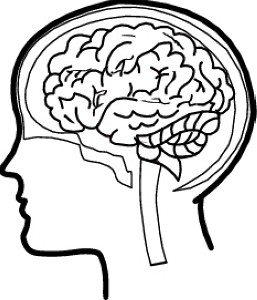 257x300 Brains Clipart Long Term Memory
