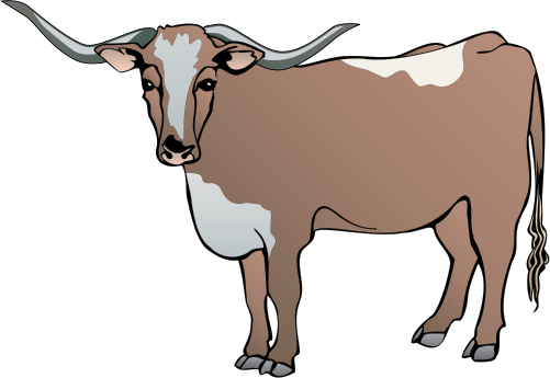501x345 Longhorn Cattle Clipart Drawing