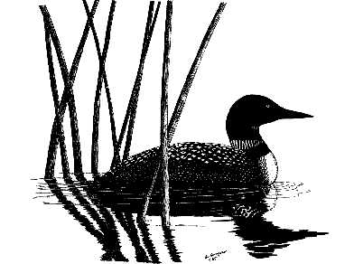 392x292 Loon Silhouette Clipart