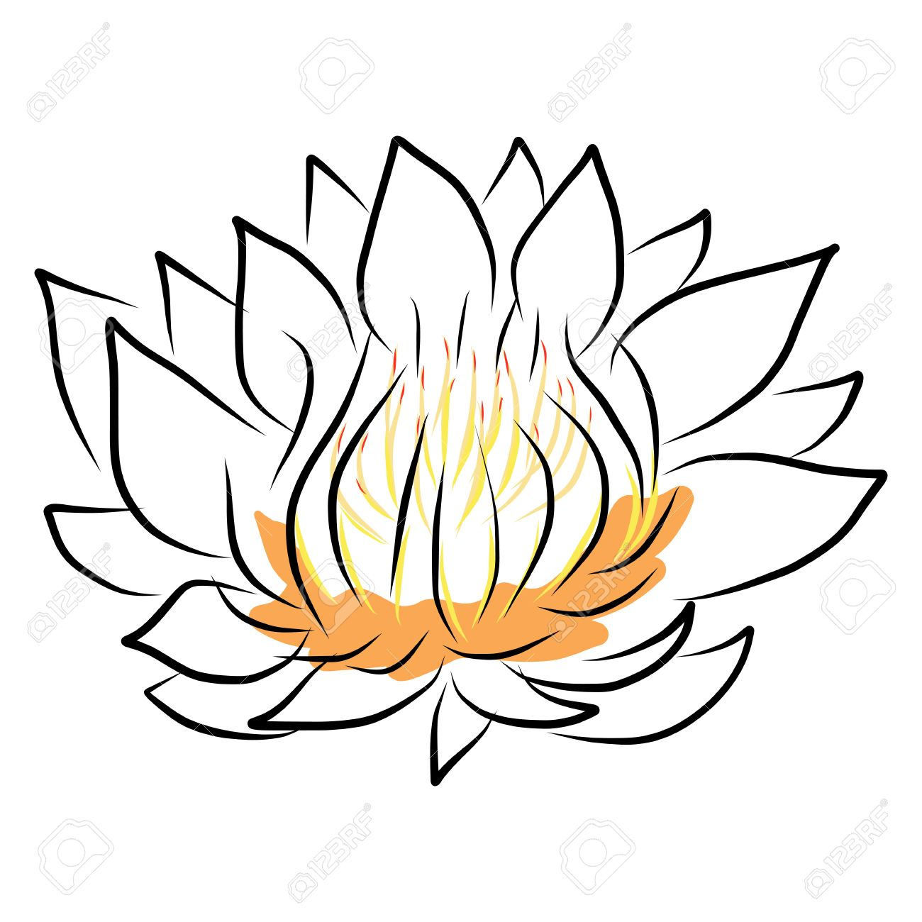 1300x1300 Hand Drawing Water Lily, Lotus, Flower. Vector Eps10 Royalty Free