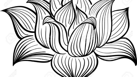 Lotus Drawing Free Download Best Lotus Drawing On Clipartmagcom