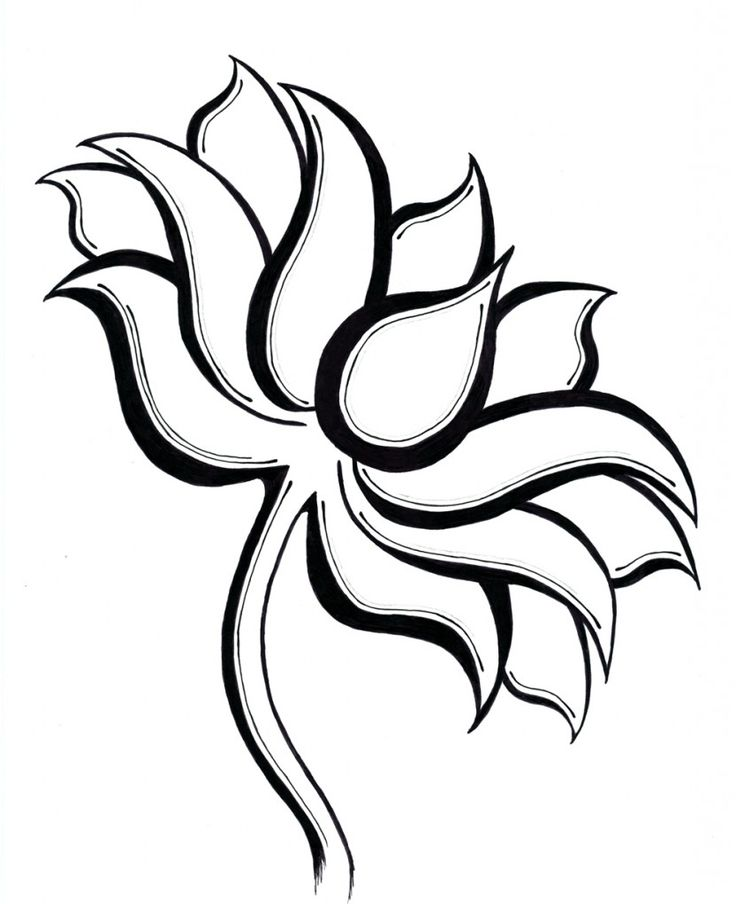 736x904 Pictures Lotus Flower Line Drawing,