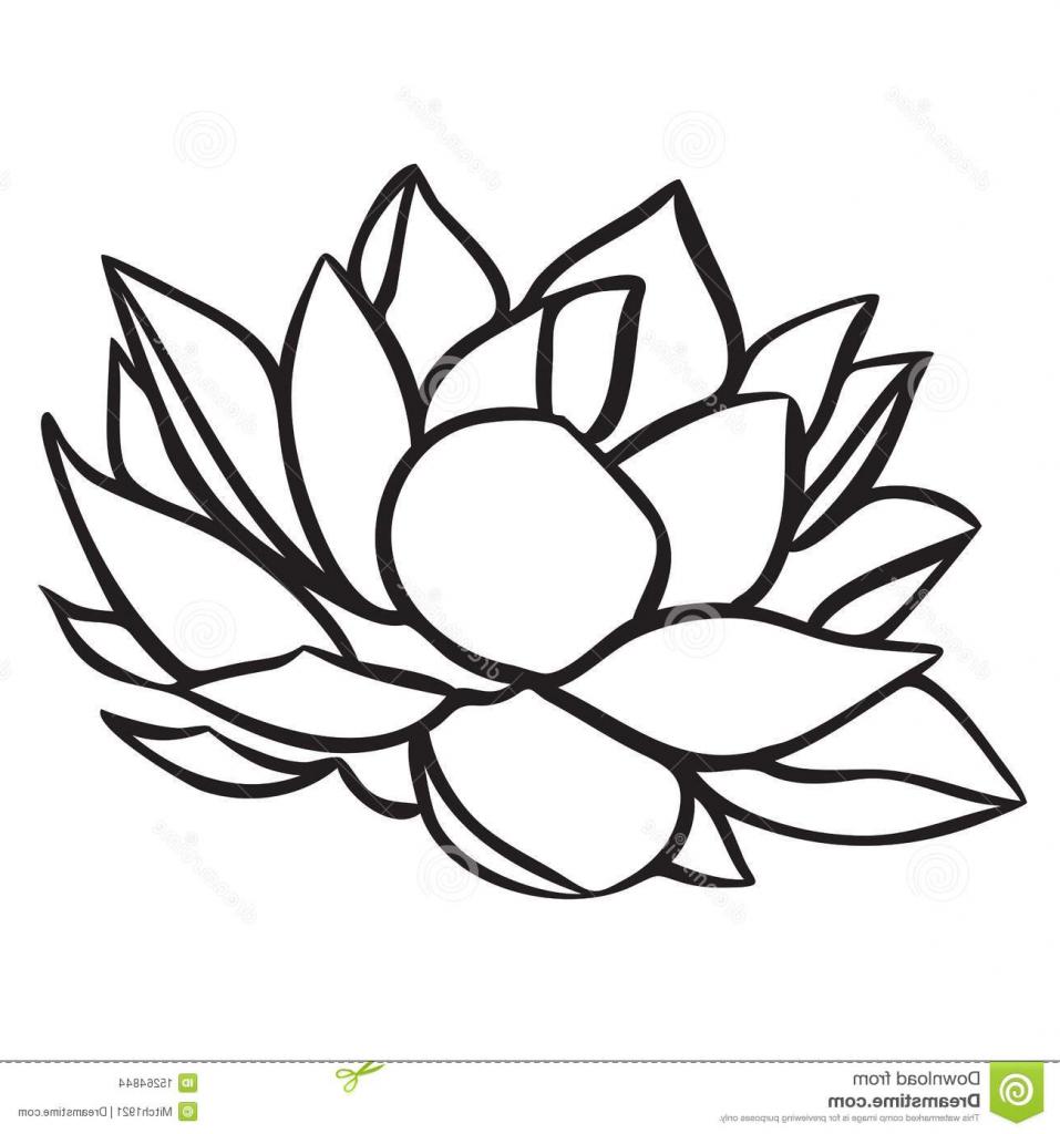 957x1024 Simple Lotus Drawing Lotus Stock Images Image 15264844