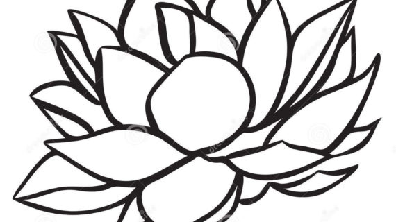 570x320 Simple Lotus Flower Drawing Simple Lotus Drawing