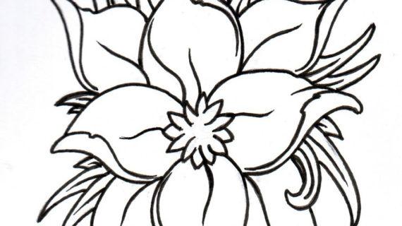 570x320 Lotus Flower Outline Drawing White Lotus Flower Clip Art Jos
