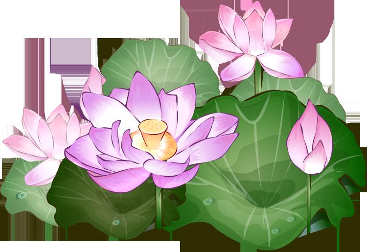 750x515 Lotus Clipart Transparent