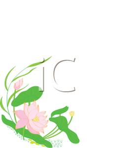 231x300 Art Image A Pink Lotus Flower