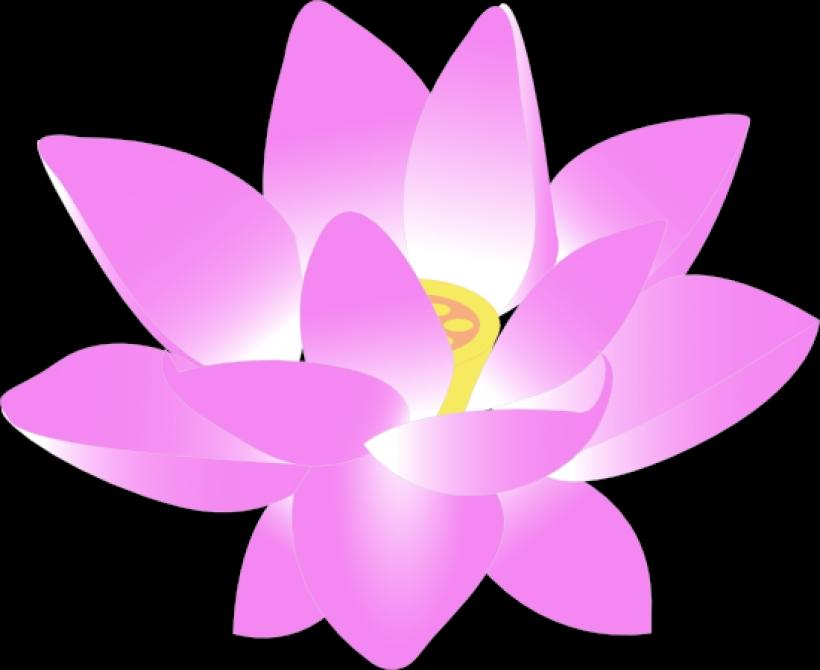 820x670 Free To Use Amp Public Domain Lotus Flower Clip Art