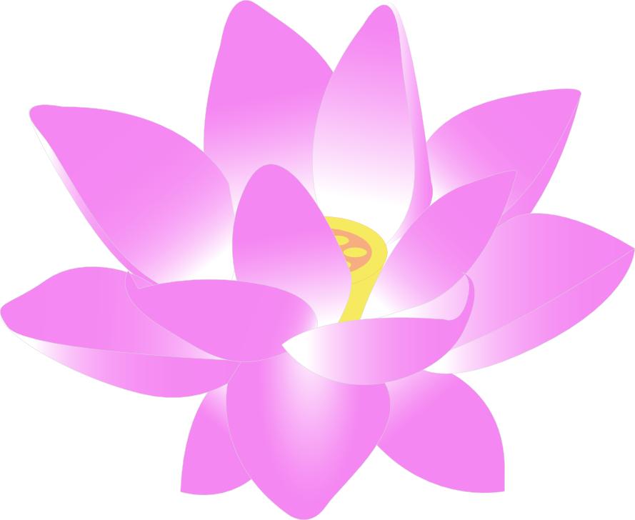 889x728 Lotus Flower Clip Art