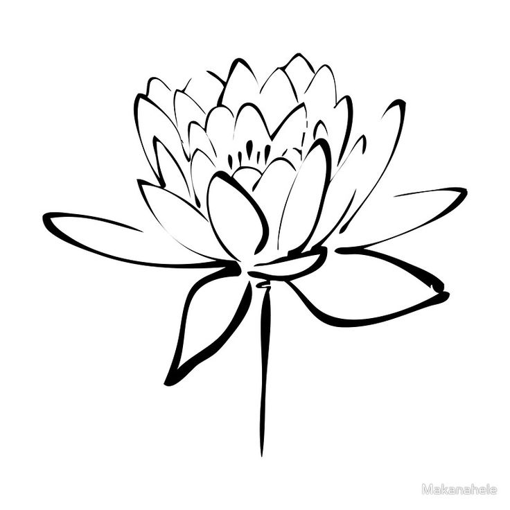 Lotus Flower Line Drawing