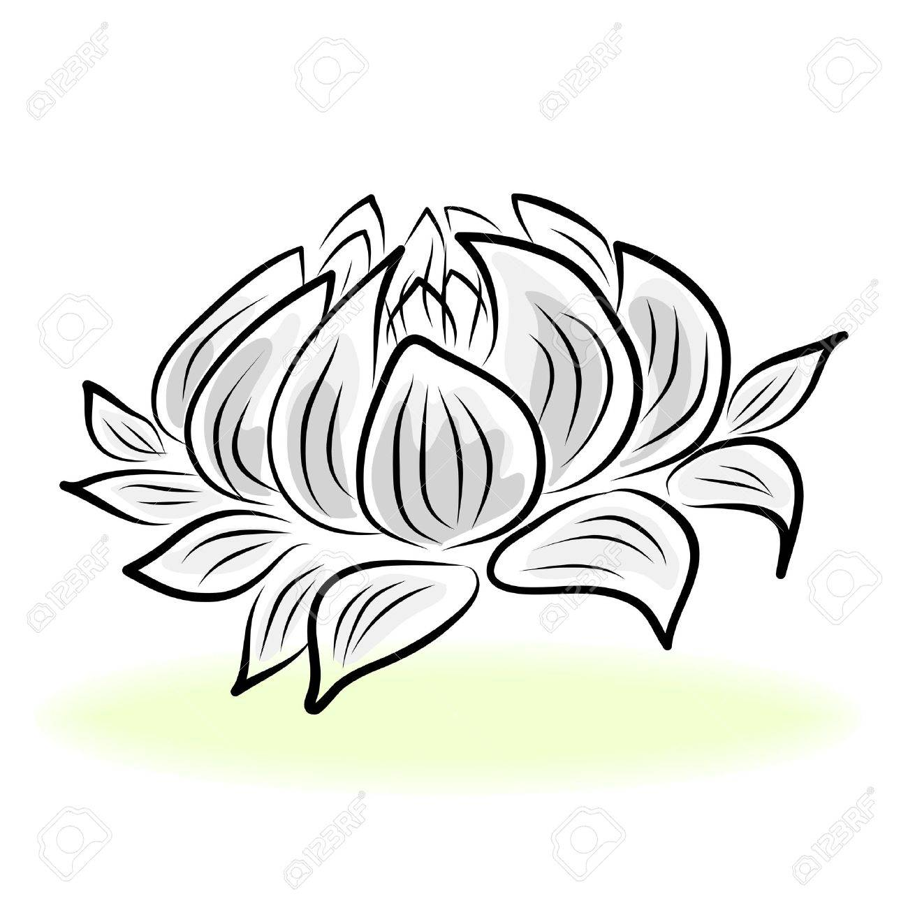 Lotus flower line drawing free download best lotus flower line 1300x1300 hand drawing water lily lotus flower royalty free cliparts izmirmasajfo
