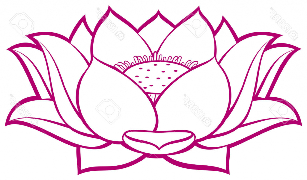 Lotus flower line drawing free download best lotus flower line 1024x601 lotus blossom drawing lotus flower royalty free cliparts vectors mightylinksfo