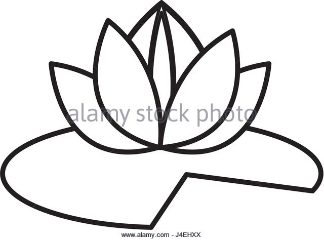 640x474 Lotus Flower Design Stock Photos Amp Lotus Flower Design Stock