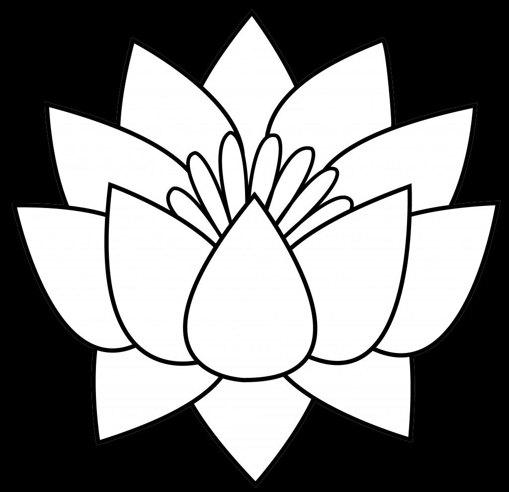 Lotus Flower Line Drawing Free Download Best Lotus Flower Line