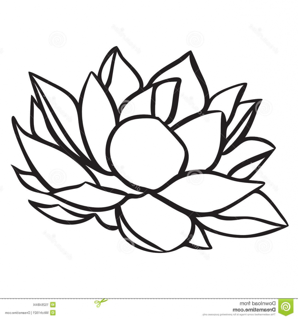 Lotus Flower Line Drawing Vector Free Download : Lotus flower line drawing free download best
