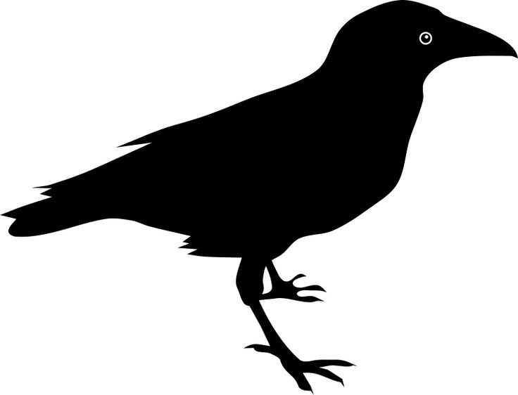 736x562 Raven Birds Clipart, Explore Pictures
