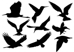 285x200 Love Birds Silhouettes Free Vector Graphic Art Free Download
