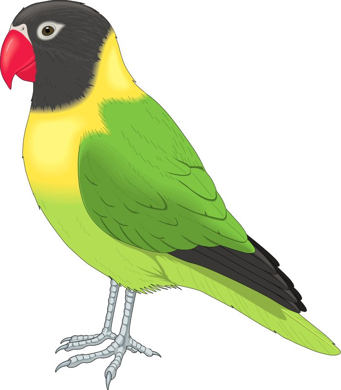700x800 Bird clipart free images 8