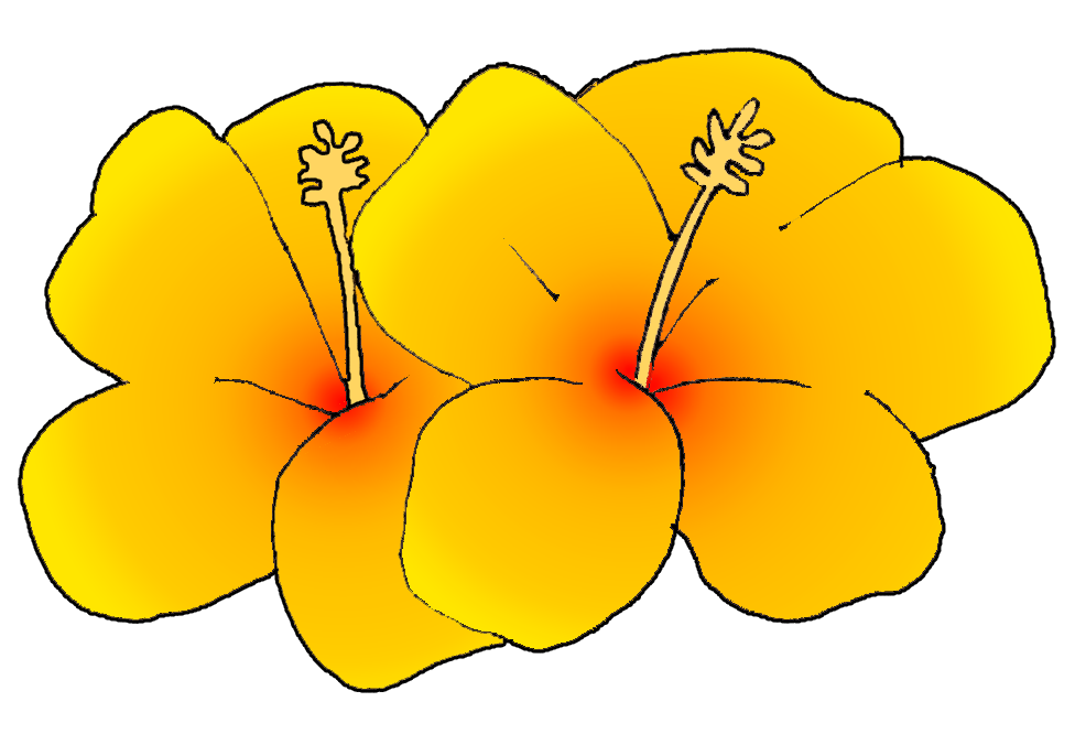 976x666 Hawaiian Flower Hawaii Clipart Summer Flower Pencil And In Color
