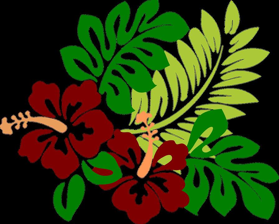 895x720 Imagem gratis no Pixabay