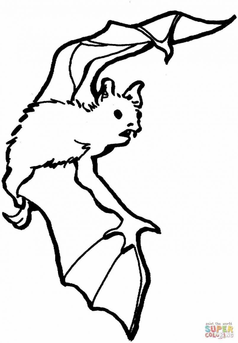 805x1159 Coloring Pages Animals Coloring Page Free Printable Bat Pages