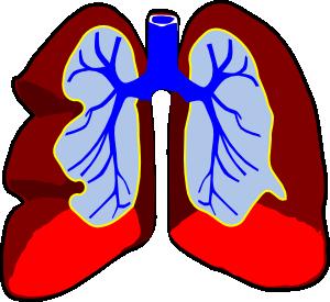 300x275 Healthy Lungs Clip Art